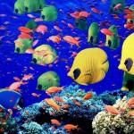 Рыбы на Мальдивских островах