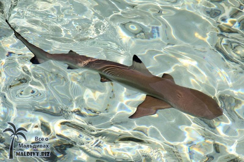 Рыбы на Мальдивских сотровах Мальдивы