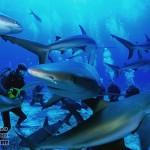 Акулы на Мальдивах