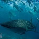 Мальдивские острова туры