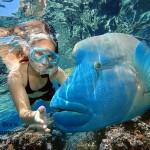 snorkeling-maldives-2