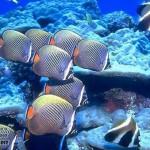 maldivy-dayving-10