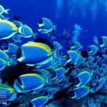 maldivy-dayving