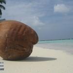 maldivy-fruit-4