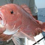 maldivy-rybalka-3