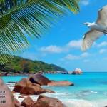 Мальдивы или Сейшелы, что лучше
