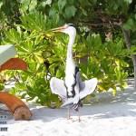 zhivitnie-maldivy