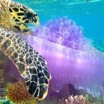 Животные на Мальдивах