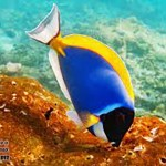 zhivitnie-maldivy-4