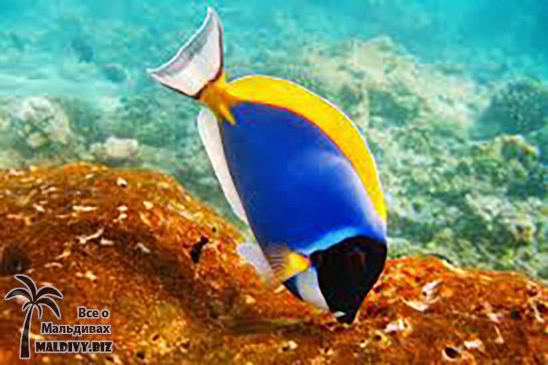 Рыбы мальдивских островов каталог юбилейная монета великие луки