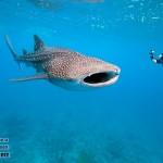 zhivitnie-maldivy-6