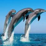 zhivitnie-maldivy-7