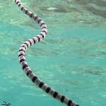 Змеи на Мальдивах